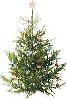 tree_start.jpg